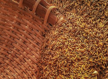 Grain storage pests no match for Bio-Gene after Flavocide trials reach six-month mark