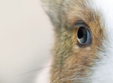 NeuroScientific Biopharmaceuticals seeks glaucoma cure after positive results on rabbit