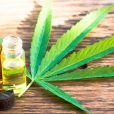 Zelda to launch clinical trials testing cannabis as solution to insomnia