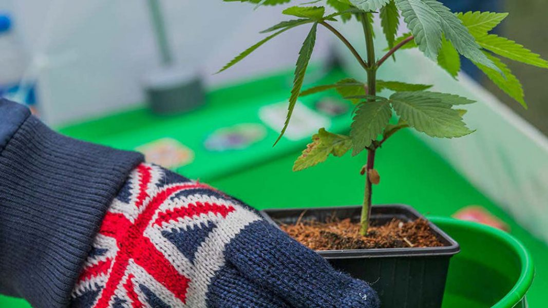 Medical cannabis adoption trend continuing in UK after Althea Group secures key licence