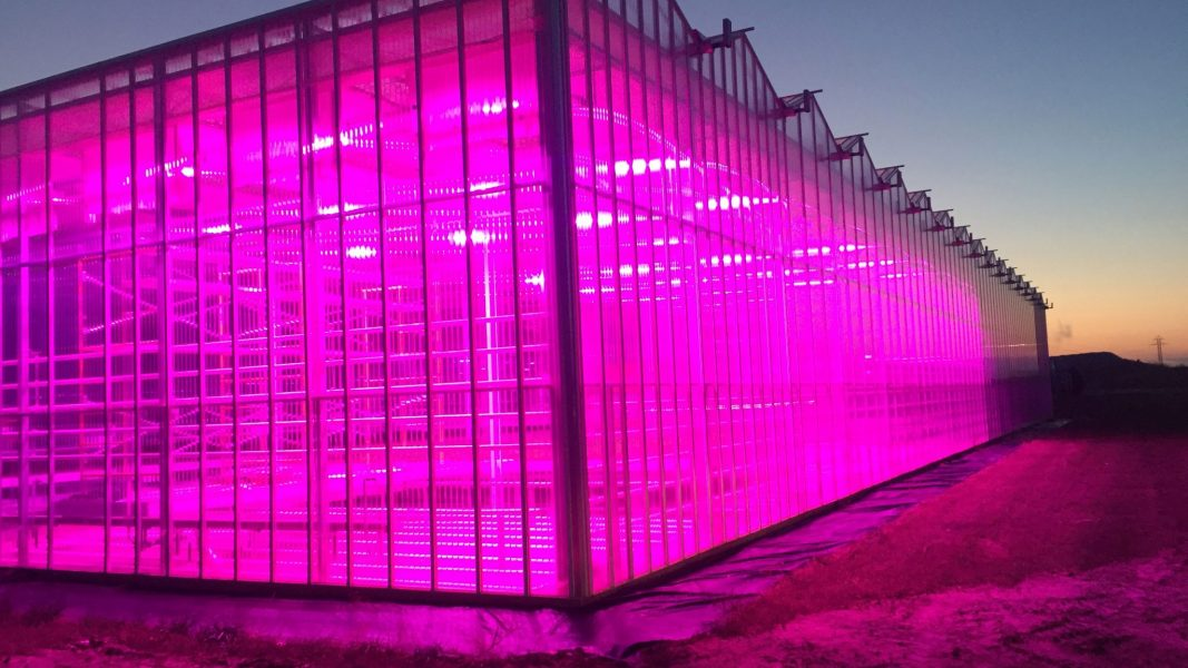 Researchers choose LumiGrow for horticulture studies, Enevis continues turnaround