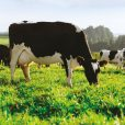 China to eat for a lifetime as Fonterra sell China farms for $555m