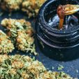 Althea lands first purchase order with WeedMD for cannabis products