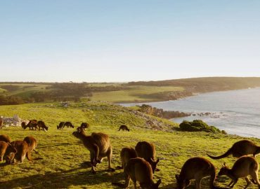 Mighty Craft secures $500k grant to develop Distillery on Kangaroo Island