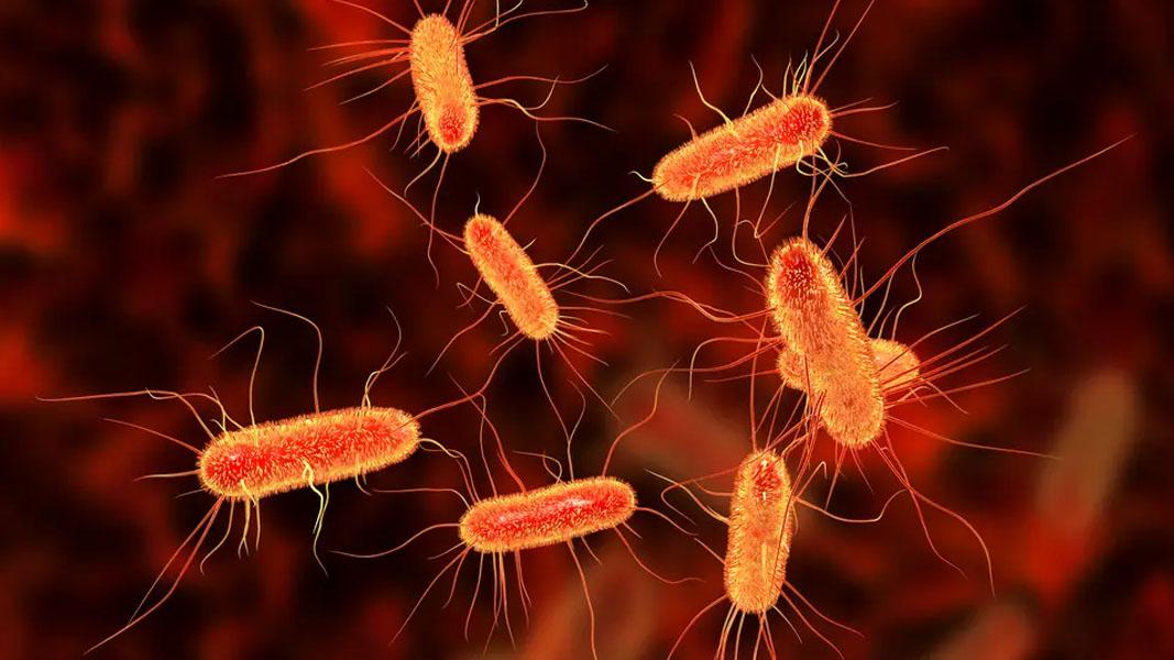 Graphene coating kills E-Coli, Sparc Technologies testing identifies