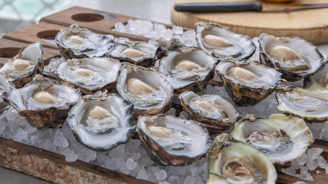 Angel Seafood to build automated FlipFarm following strong oyster demand and sales