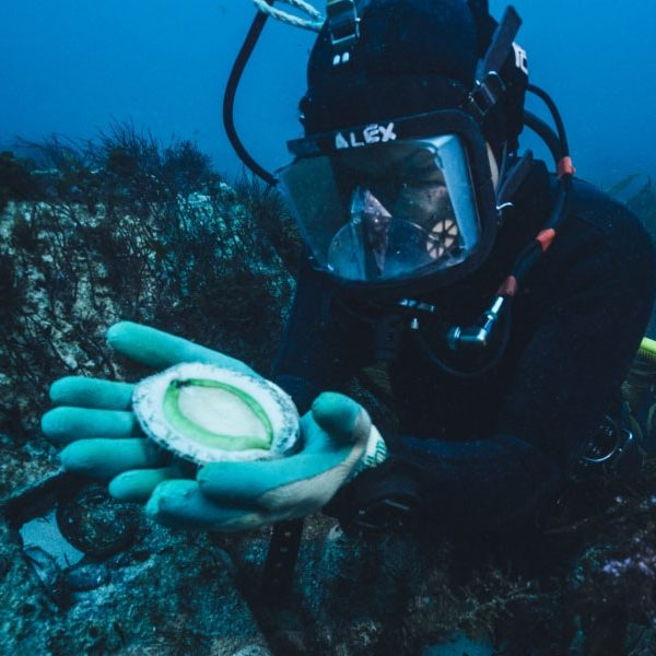 Ocean Grown Abalone applies for sustainability certification as sales boom