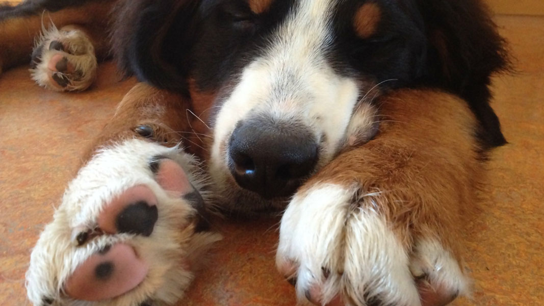 Pup got itchy paws? You might want to remember this company's name