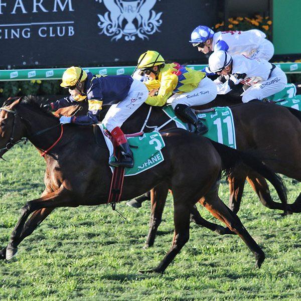 Racing shines amid snap lockdowns as Apiam capitalises on booming veterinary market